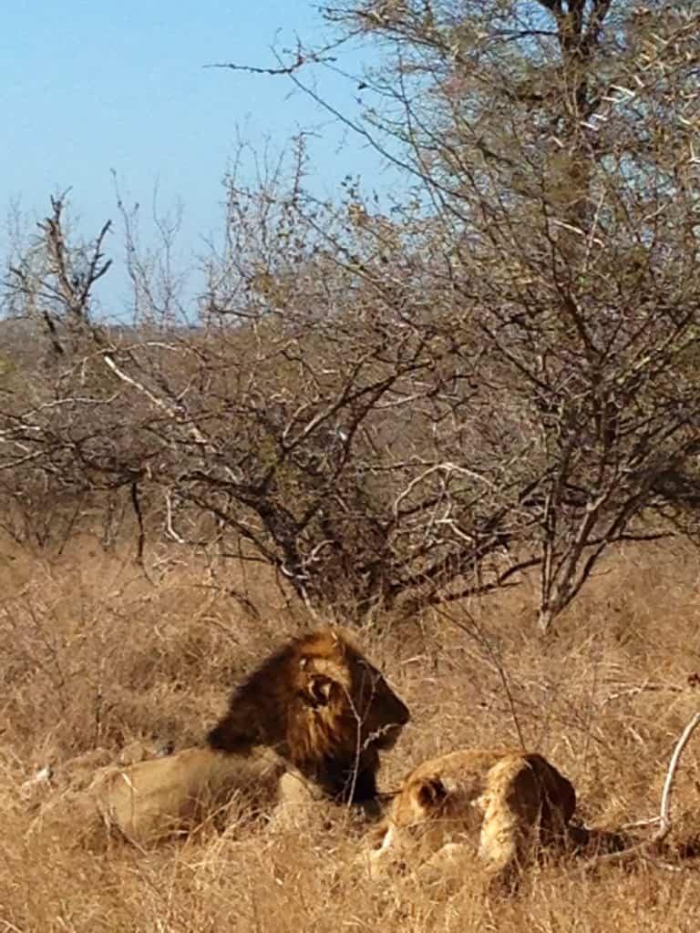 Come organizzare un safari al Kruger.