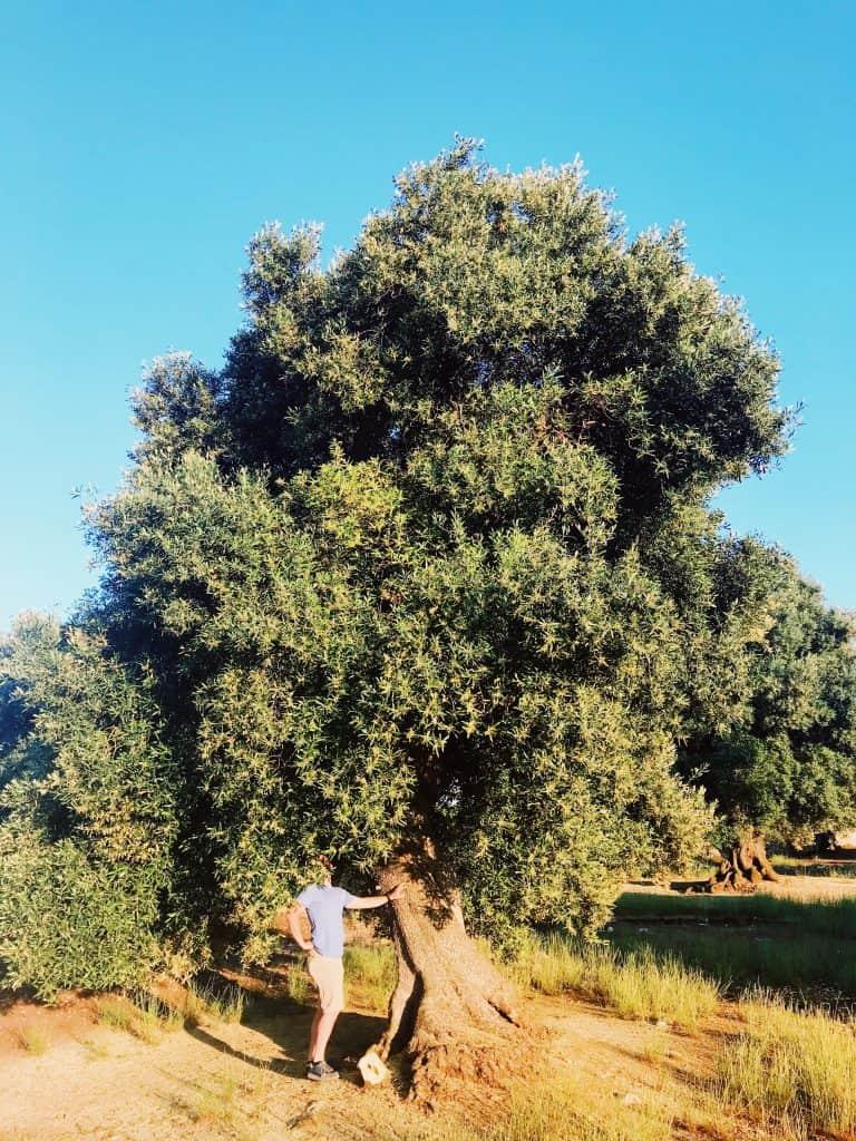 Cosa vedere in Puglia