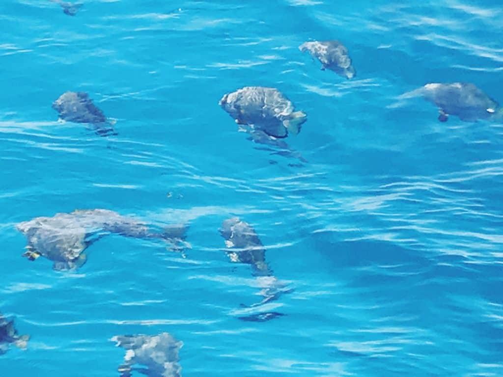 Dove fare un magnifico snorkeling alla Grande Barriera Corallina Australiana
