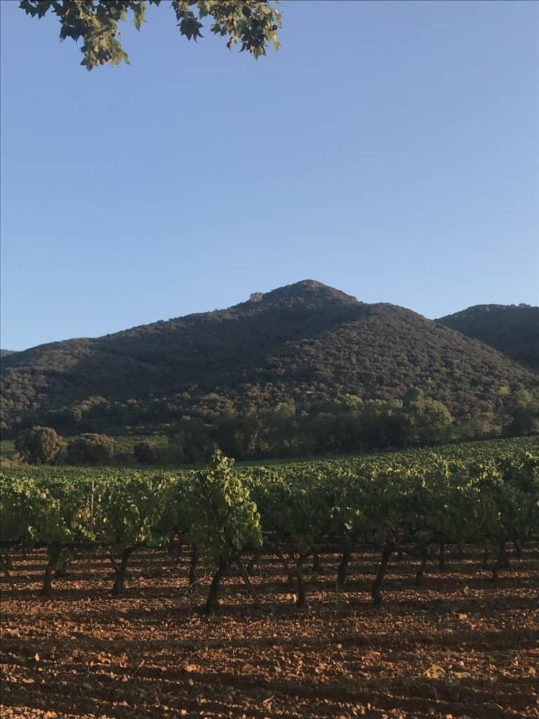Le vigne di Poblet